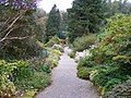 Pathway near entrance of Arduaine Gardens - geograph.org.uk - 1549744.jpg
