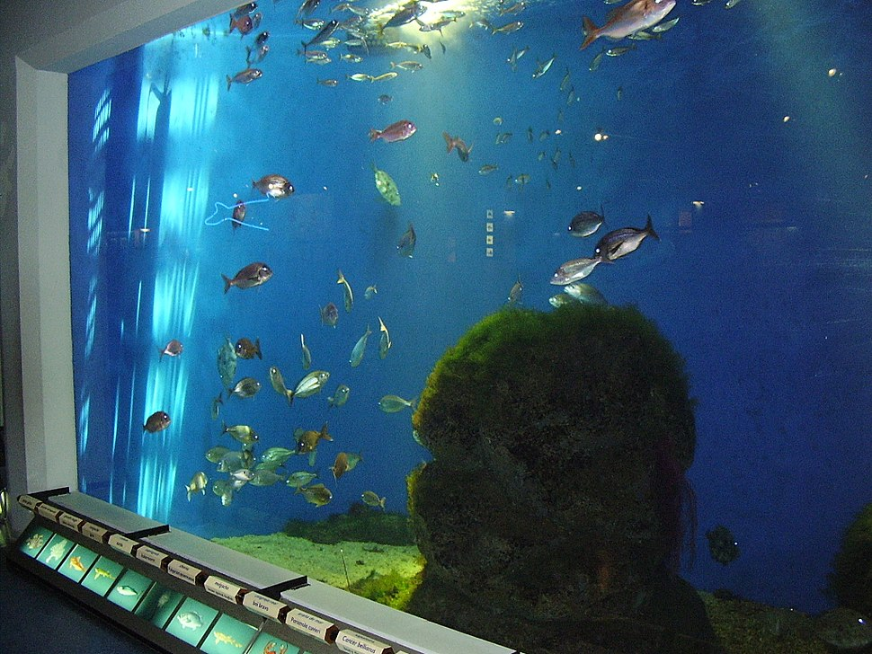 Peces en el Aquarium Finisterrae