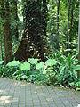 Penang Botanic Gardens (26).JPG