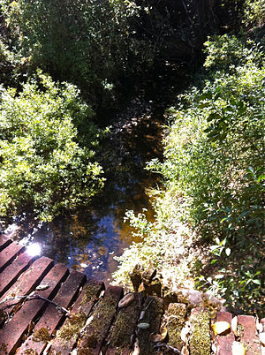 Laguna Creek (San Mateo County) - Laguna Creek has perennial pools as shown here looking upstream from South Bridge at Filoli, mid-August 2012.