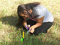 Perfectionism - Measuring Grass Blade2- Original Size.jpg