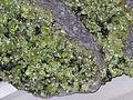Peridot in basalt.jpg