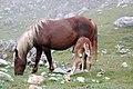 Picos de Europa DSC 0215 09.jpg