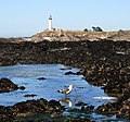 Pigeon Point Lighthouse and tide pools 2.jpg