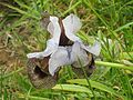 PikiWiki Israel 42124 Iris Hermona.JPG