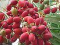 Pinang fruit.JPG