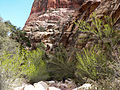 Pine Creek Canyon south fork 1.jpg