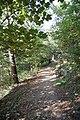 Pine walk, Shaftesbury, Dorset - geograph.org.uk - 1007870.jpg