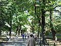 Planty krakowskie (od str. ul. Pijarskiej) 02.jpg