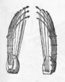 Pluriarc Praetorius.png