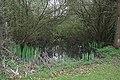 Pond at Bentley Heath - geograph.org.uk - 1261400.jpg