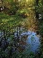 Pond near Middleton Manor - geograph.org.uk - 1573354.jpg
