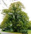 Præstens træ.jpg