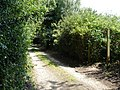 Private road to the Dower House - geograph.org.uk - 1381682.jpg