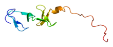 Protein CSRP1 PDB 1ctl.png