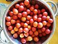 Prunus domestica, mirabelka (2).jpg