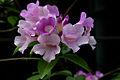 Purple flower (2304133656).jpg