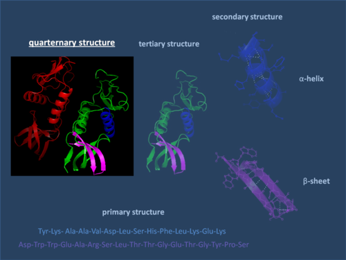 Structure of the protein 1EFN  with focus on the quaternary structure Quaternary Structure