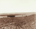 Queensland State Archives 3986 Six furrow plough two horse driller and four horse harrow at Green Hills Farm near Warwick 4 May 1894.png
