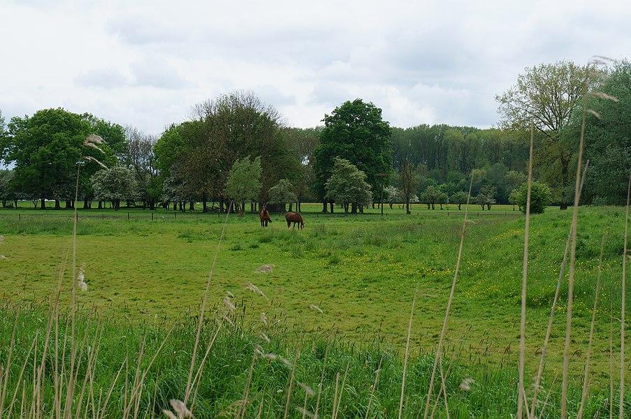 Dans la réserve naturelle régionale du Héron (Zone -Est.-limitrophe à Forest-sur-Marque).- Parc du Héron à Villeneuve-d'Ascq