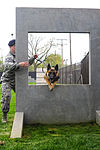 ROTC MWD demonstration 150416-F-OH119-018.jpg