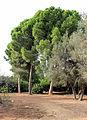 Ramat aNadiv park, Israel (12742568953).jpg
