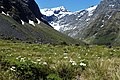 Ranunculus lyallii kz12.jpg