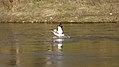 Red River, St. Andrews (500596) (14368352523).jpg