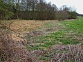 Reed bed at the brookside - geograph.org.uk - 387657.jpg