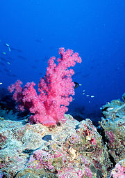 A coral reef can be an oasis for marine life.