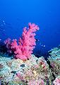 Reef0484.jpg