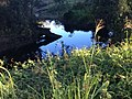 Reflection creek.jpg