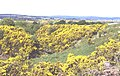 Rhynagairn - geograph.org.uk - 8841.jpg