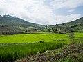 Rice fields (10497317113).jpg