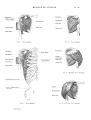 Richer - Anatomie artistique, 2 p. 56.png