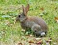 Riehler Heimstätten - Kaninchen 02.jpg