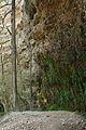 Rinnende Mauer in der Steyrschlucht 2.jpg