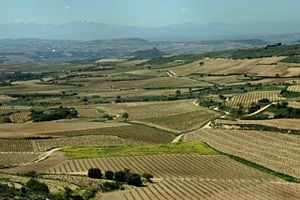 vineyards of the Rioja region in Spain
