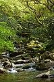 River (34010802950).jpg