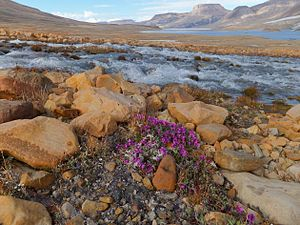 Ellesmere Island - Tundra in Quttinirpaaq National Park