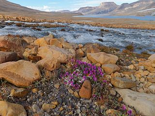 Ellesmere Island part of the Qikiqtaaluk Region of the Canadian territory of Nunavut