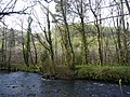 River Fowey and Largin Woods - geograph.org.uk - 750073.jpg