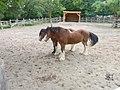 Riverdale Farm. (6351037747).jpg