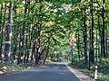 Road through the Ojcowski National Park, Poland.jpg