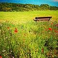 Rock-cornwall-england-tobefree-20150715-192627-01.jpg