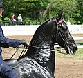 Rock Creek Spring Horse Show 2008 (2674578388).jpg