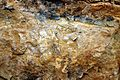 Rock Surface 2. RHS Wisley Garden Surrey UK.jpg
