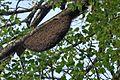 Rock bee hive DSC 5826.jpg