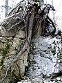 Roots (2954388801).jpg