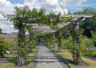 Pergola outdoor garden feature forming a shaded walkway